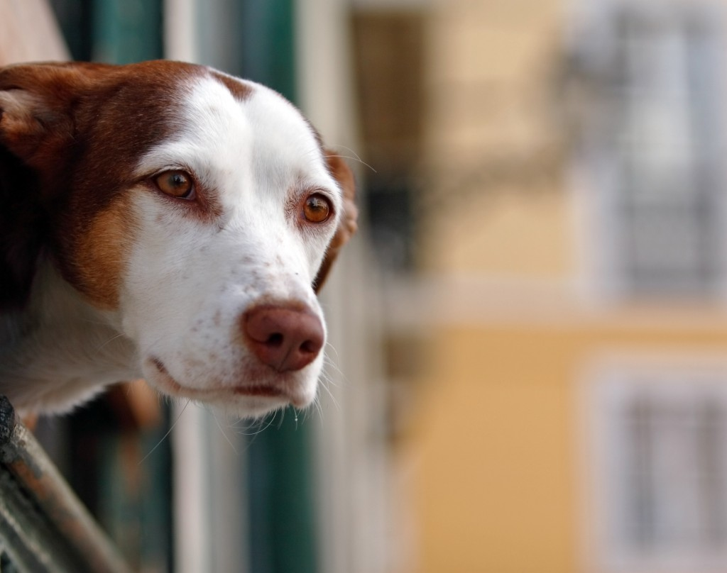 Wdr Tiere Suchen Ein Zuhause Dogblog