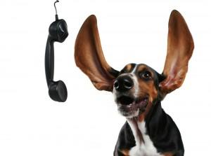 Hund mit Hörer