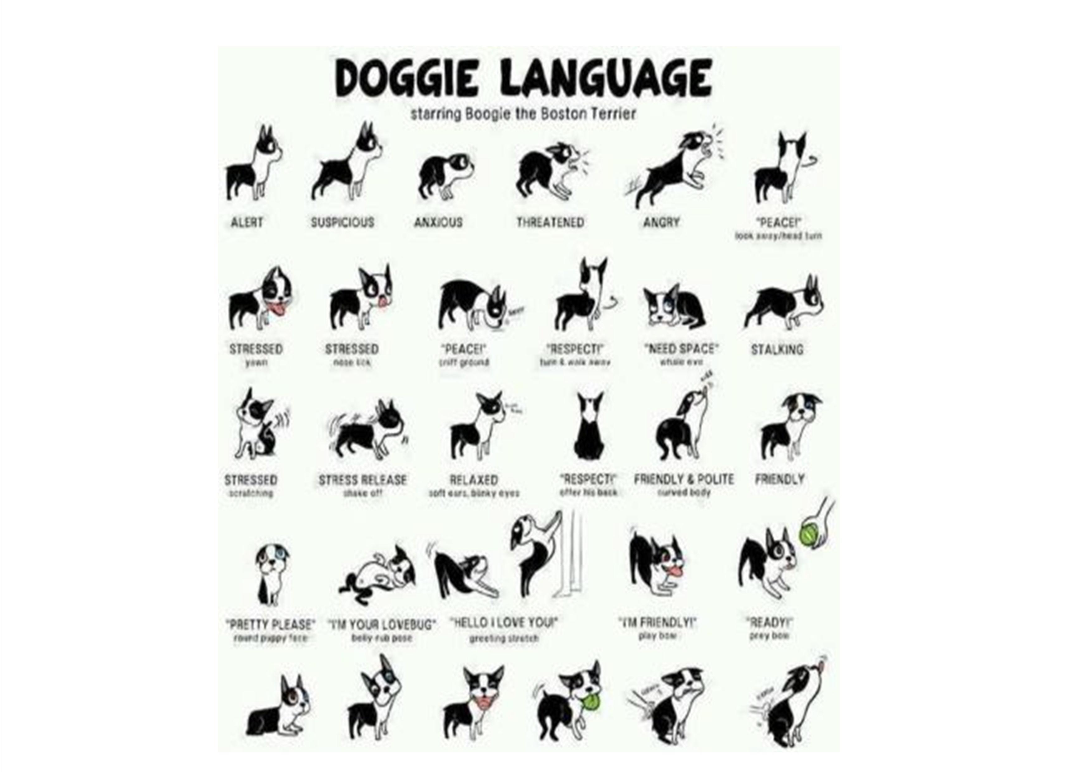 Hundesprache Bilder
