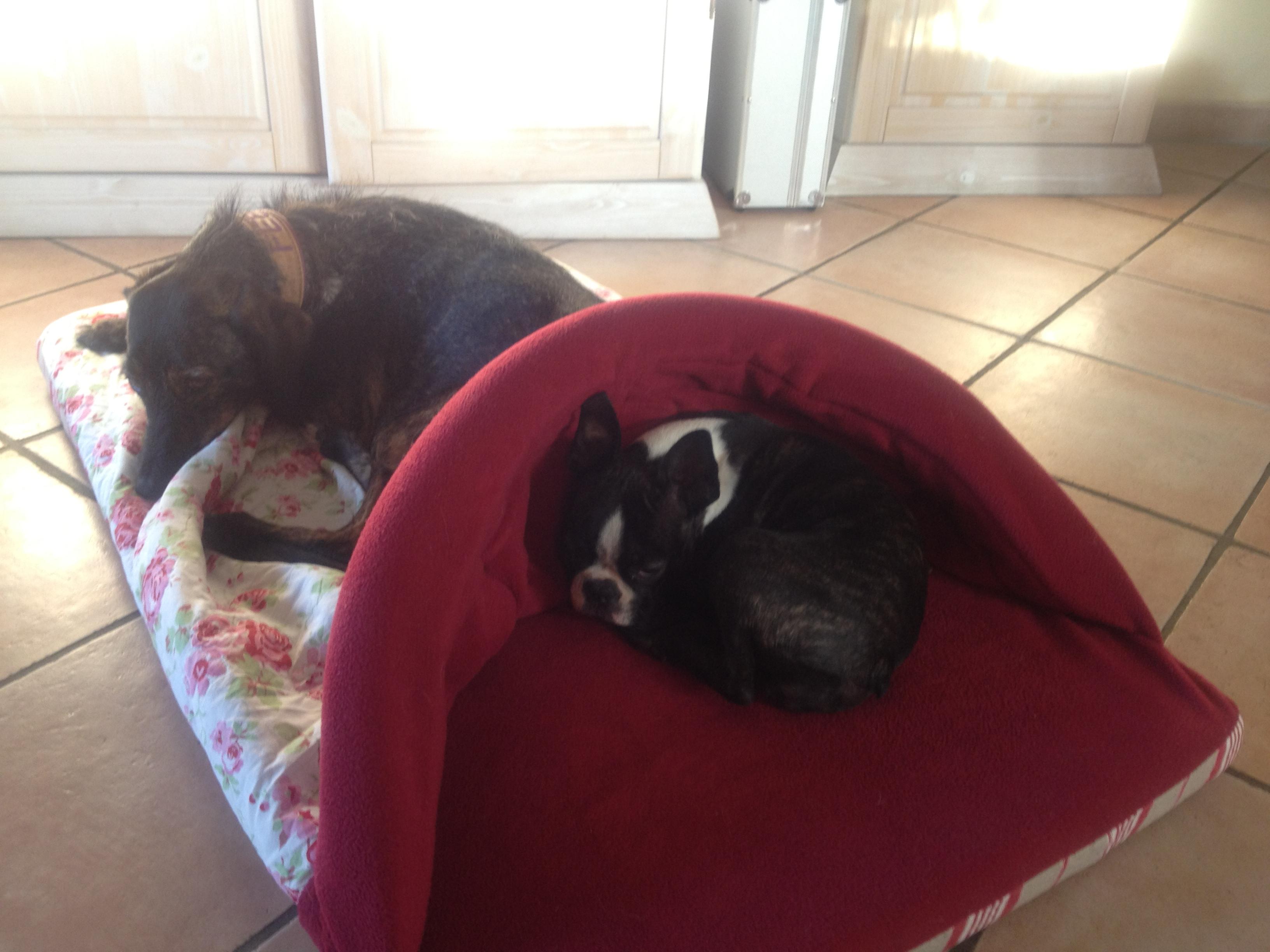 Fee und Lena im schlafsack