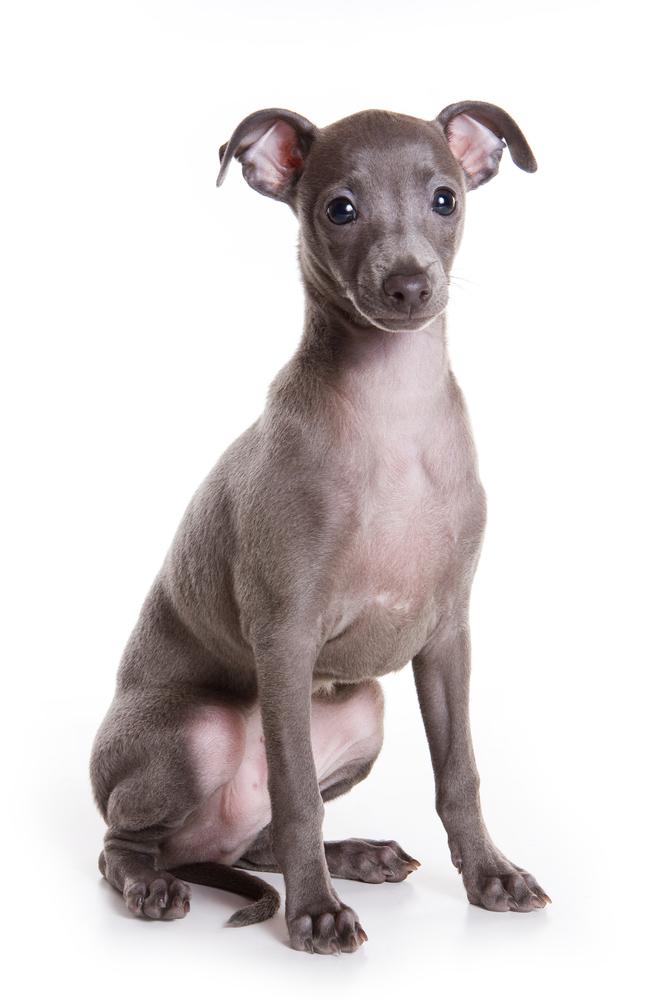 Pedigree Dog Breed Test