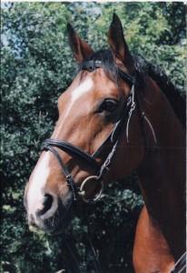 Anjou Portrait