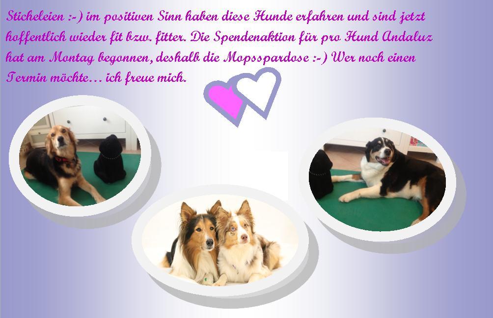 Spenden die ersten Hunde